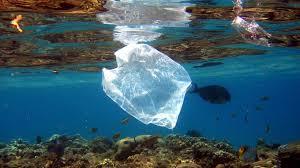 Was eine Tüte Plastik anrichtet